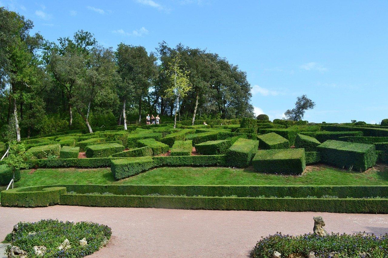 Buis des jardins de marqueyssac